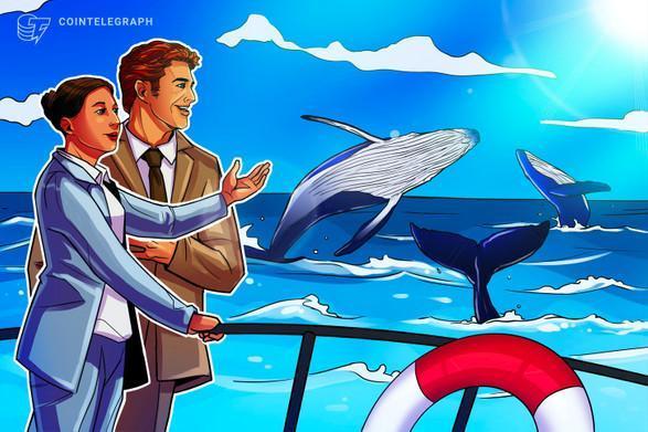 صعود 30 درصدی قیمت ریپل (XRP) و اضافه شدن 30 نهنگ جدید به بازار آن