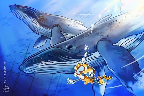 فعالیت گروهی نهنگ ها سطح حمایت اصلی برای ادامه روند صعودی بیت کوین (Bitcoin) را نشان می دهد