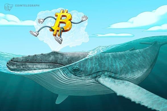 نهنگ ها طی 25 روز گذشته 90،000 بیت کوین خریداری کرده و در انتظار افزایش قیمت هستند